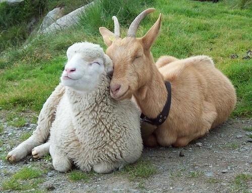 """Résultat de recherche d'images pour """"amour et amitié tendresse animaux"""""""
